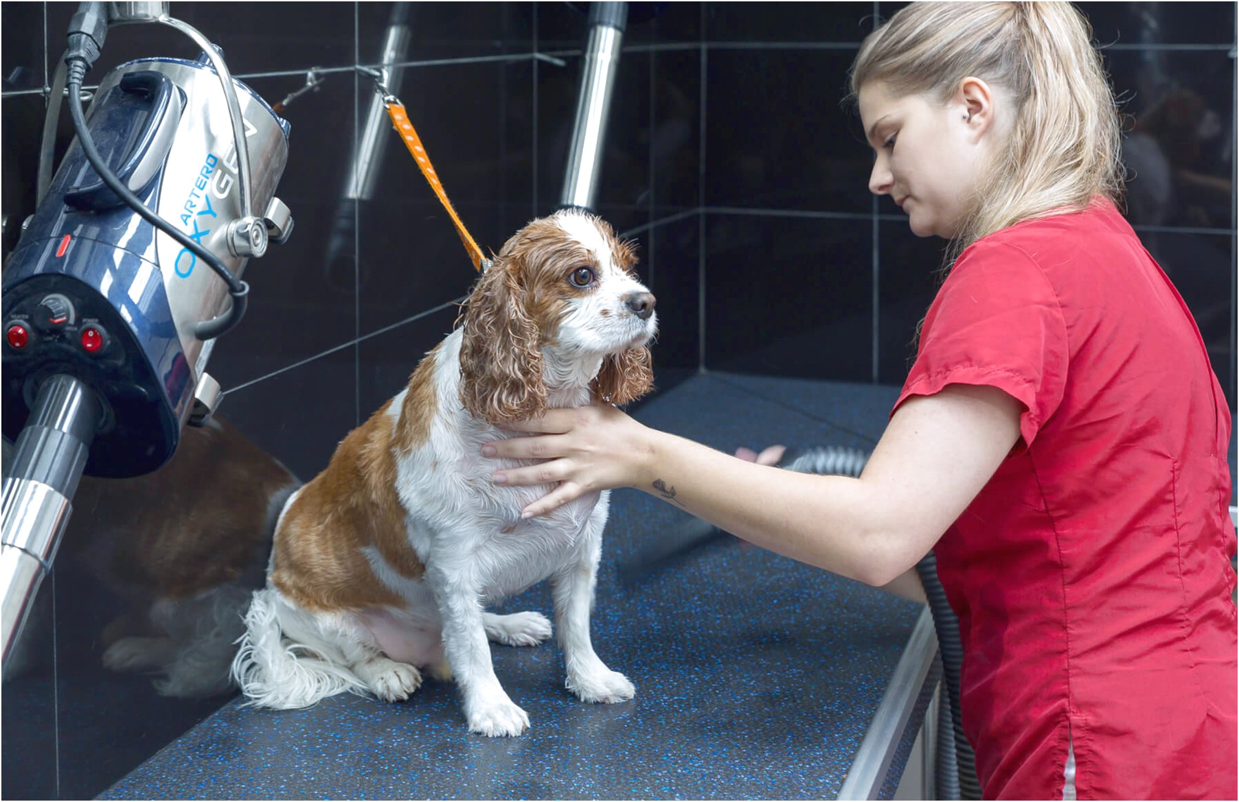 1 day dog grooming courses near me