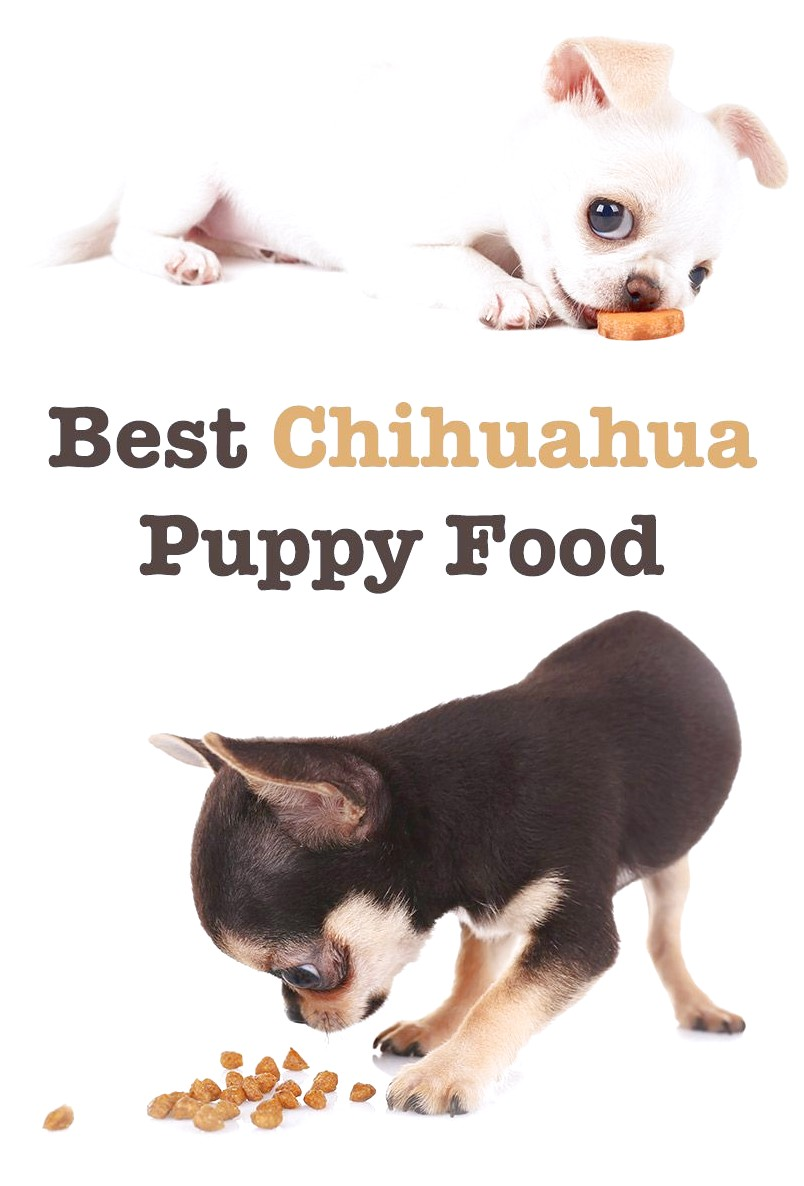 Best Dog Food For Chihuahua Puppy