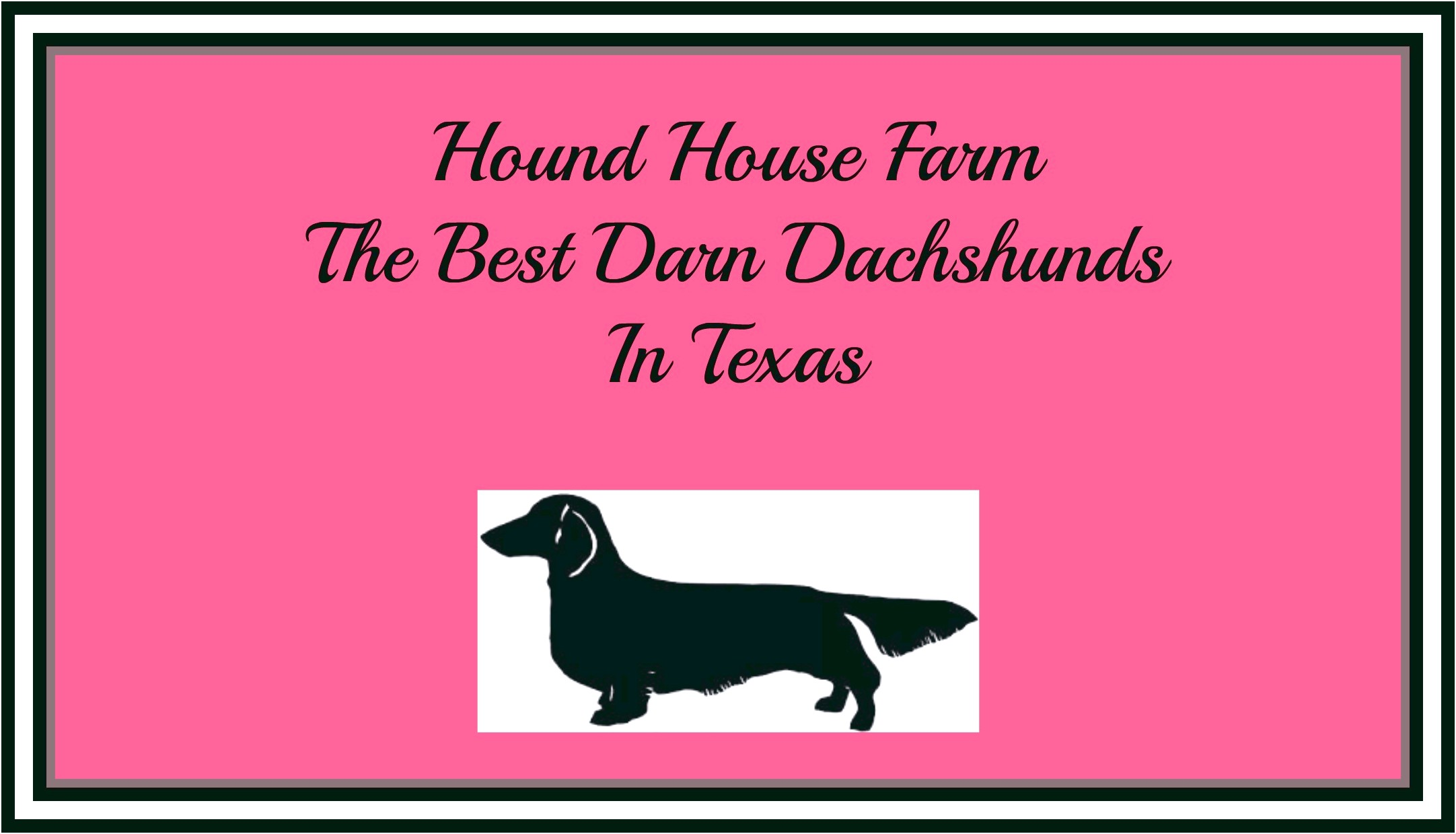 Dachshund Puppies For Sale In Texas