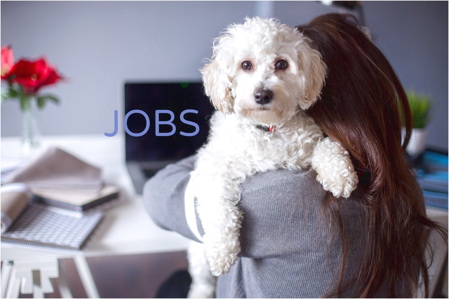 Dog Grooming Jobs Near Me