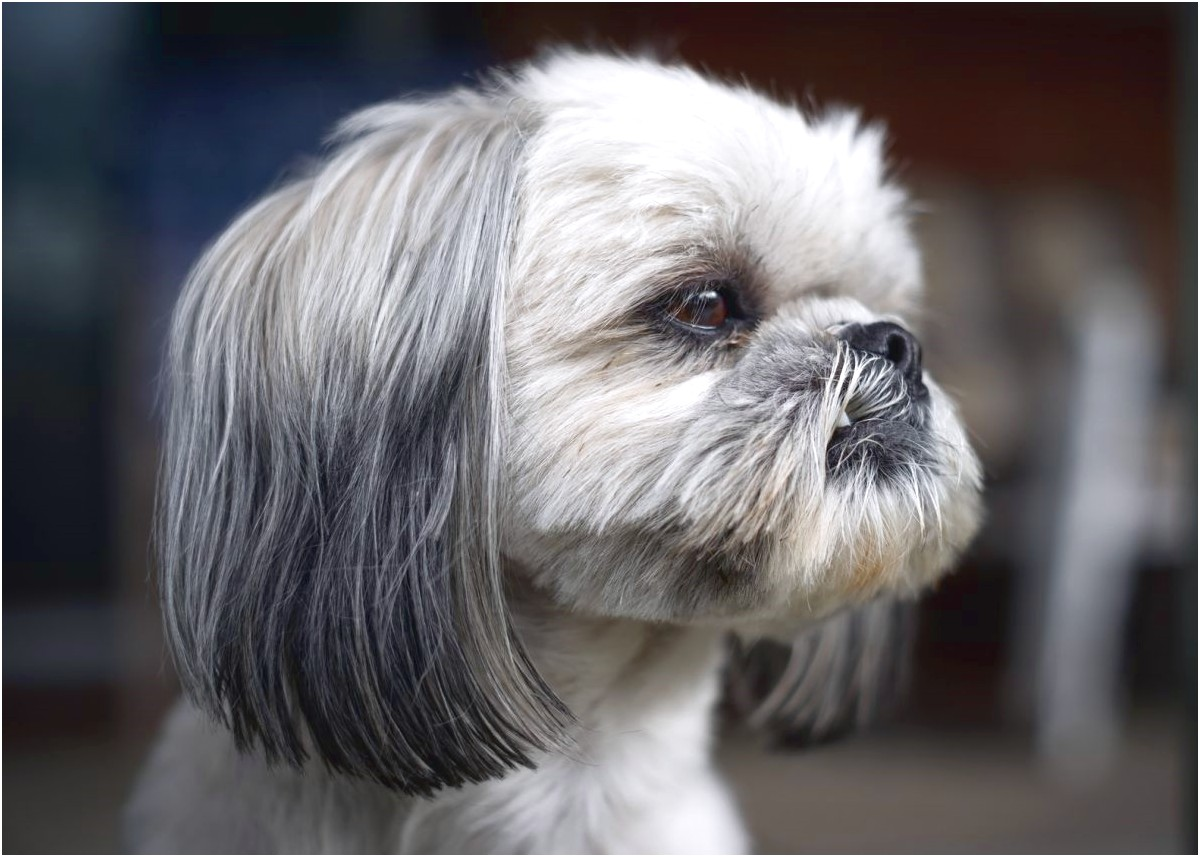 Muzzles For Shih Tzu
