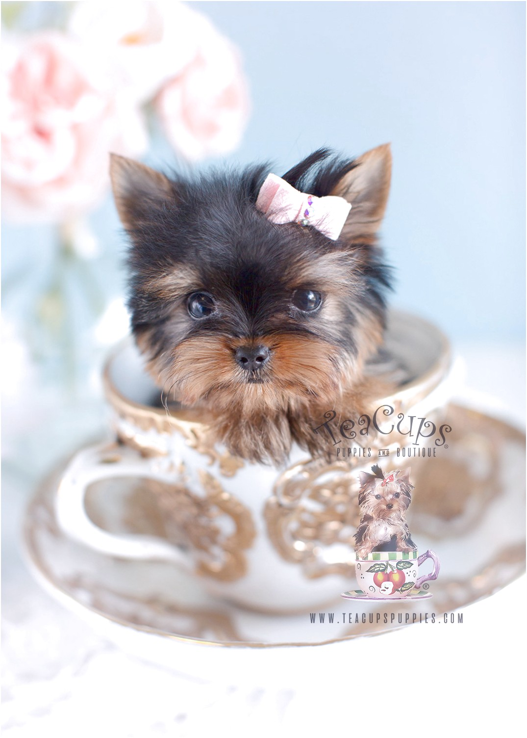 Yorkshire Terrier Teacups For Sale