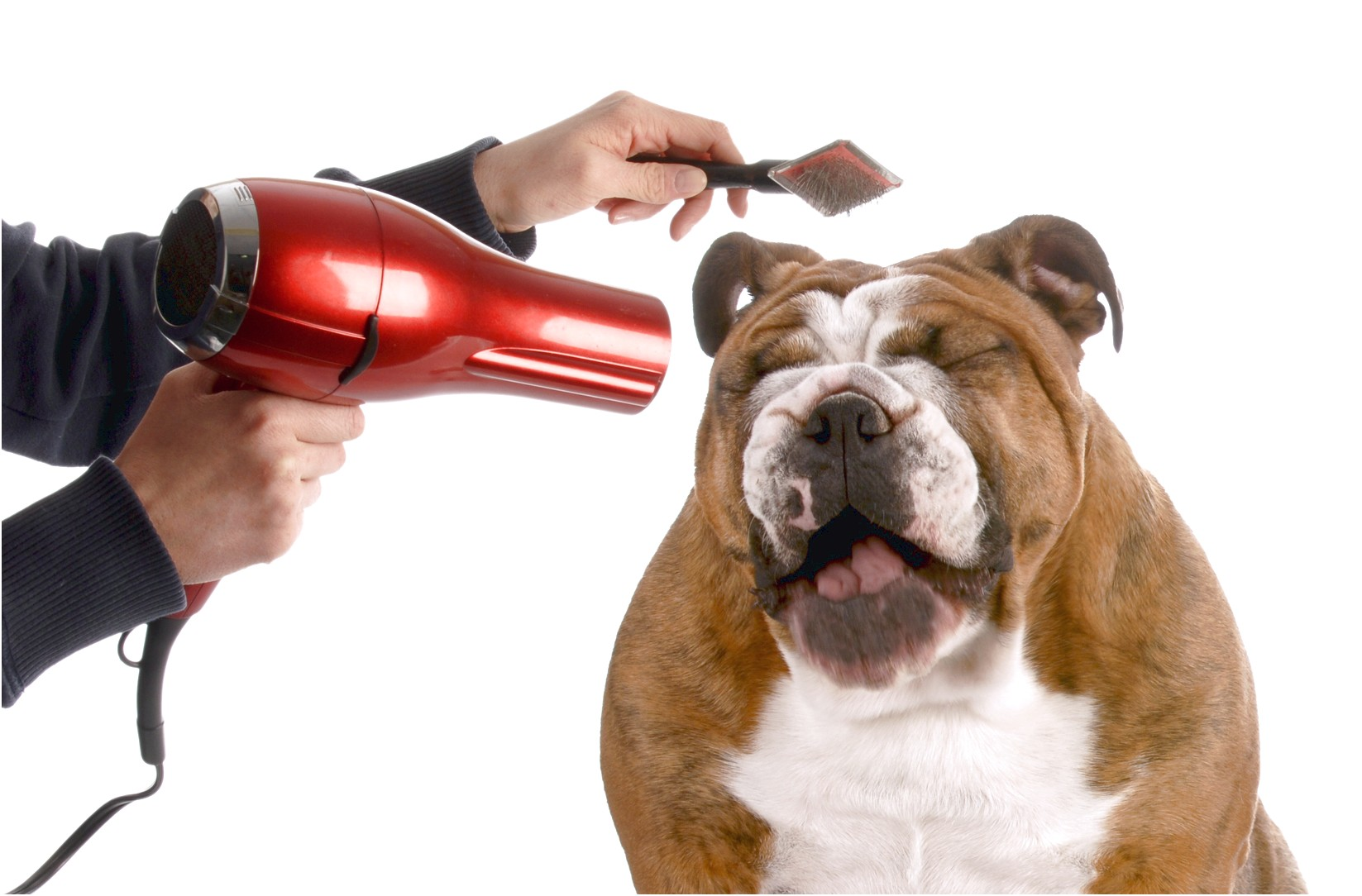 accredited dog grooming schools near me