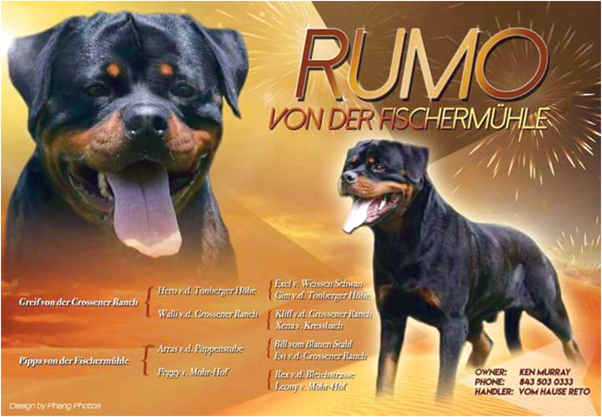 akc rottweiler puppies for sale in florida