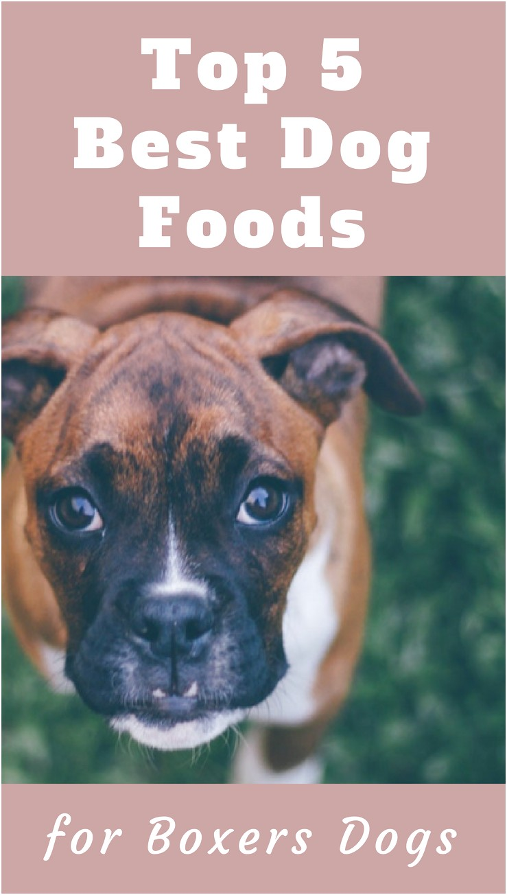 best affordable dog food for boxers