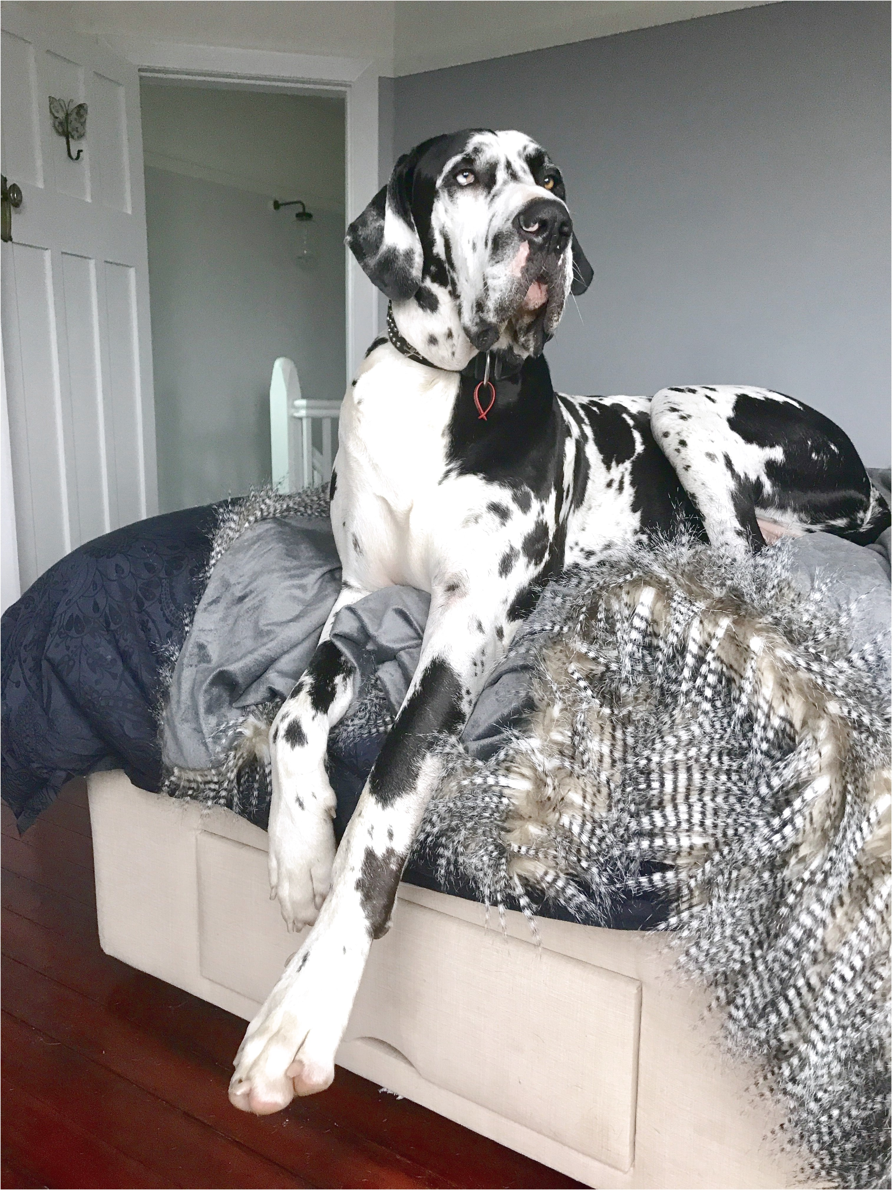 best dog food for great danes puppies