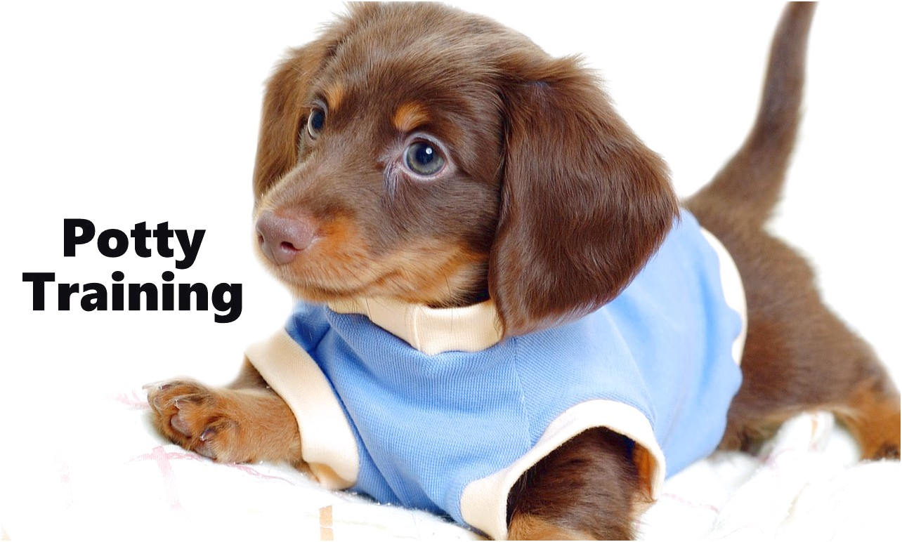 best dog food for miniature dachshund puppies