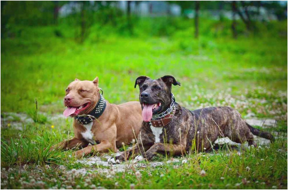 best dog food for pitbull boxer mix