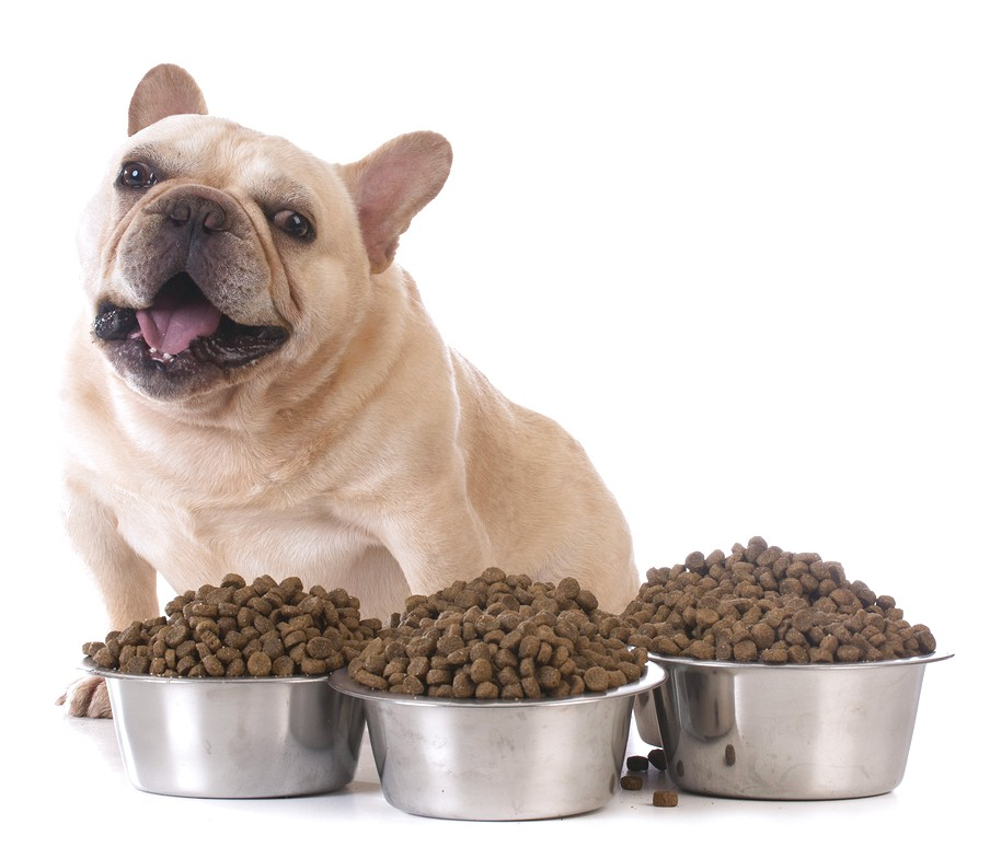 best dog food for small dogs with digestive problems