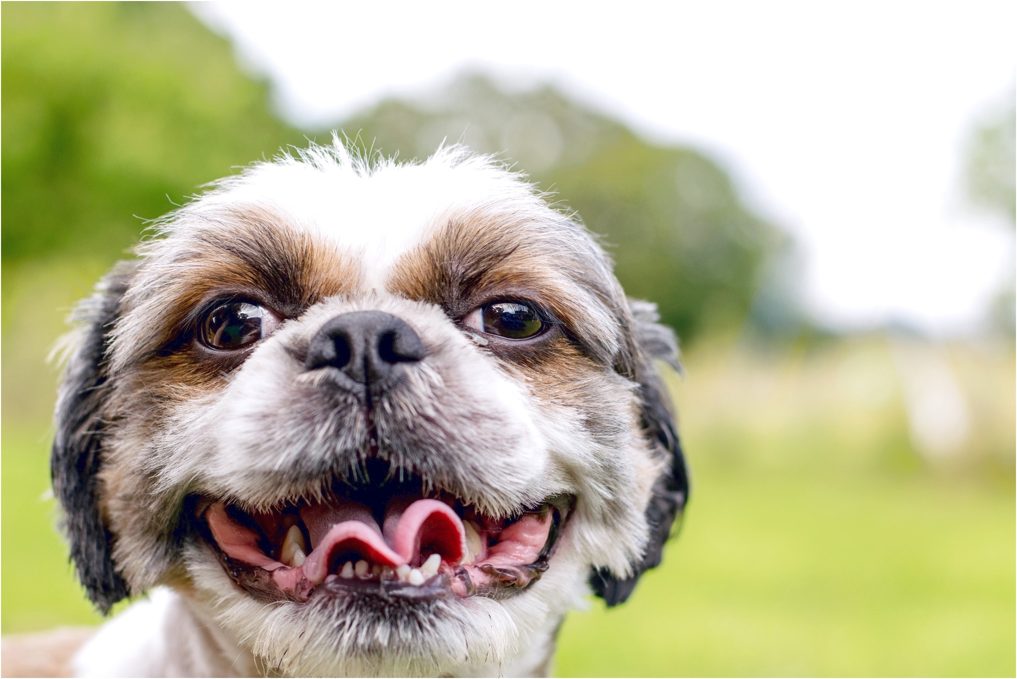 best food for shih tzu with sensitive stomach