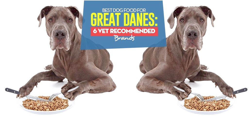best large breed dog food for great dane