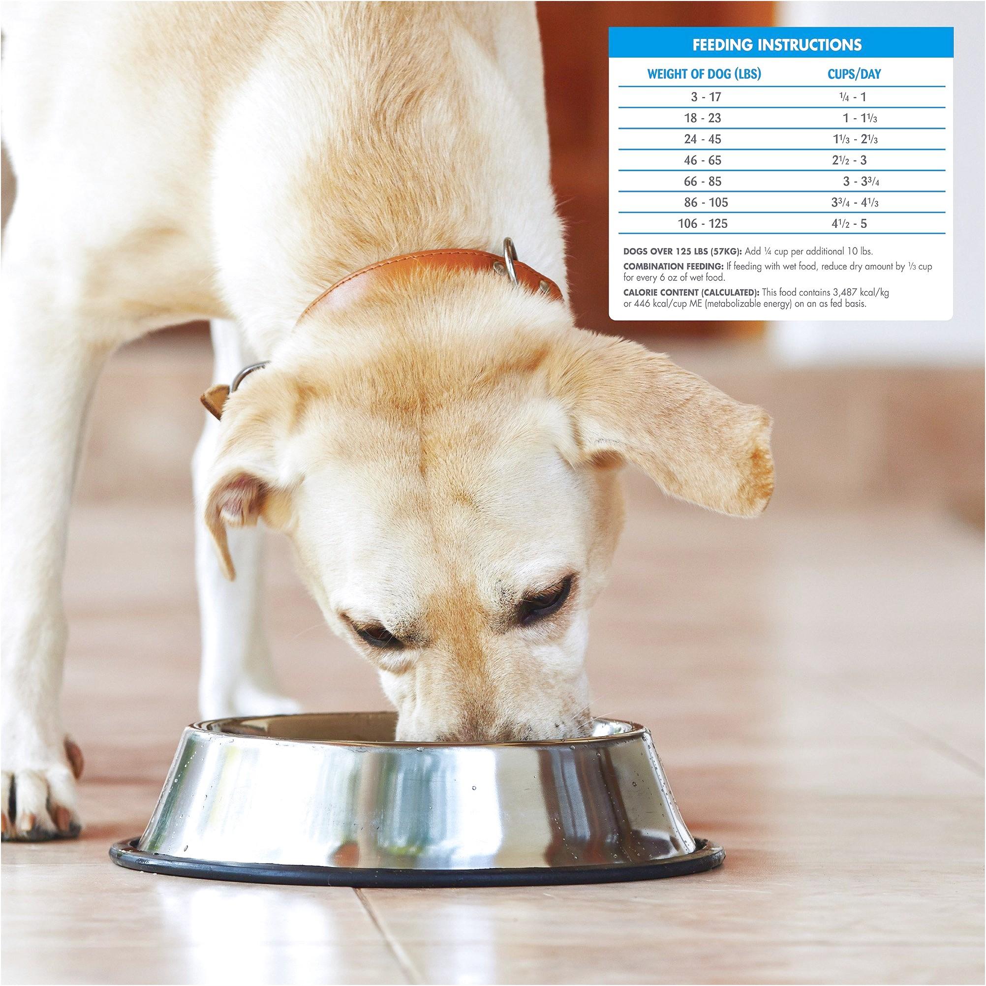 best limited ingredient dog food for small dogs