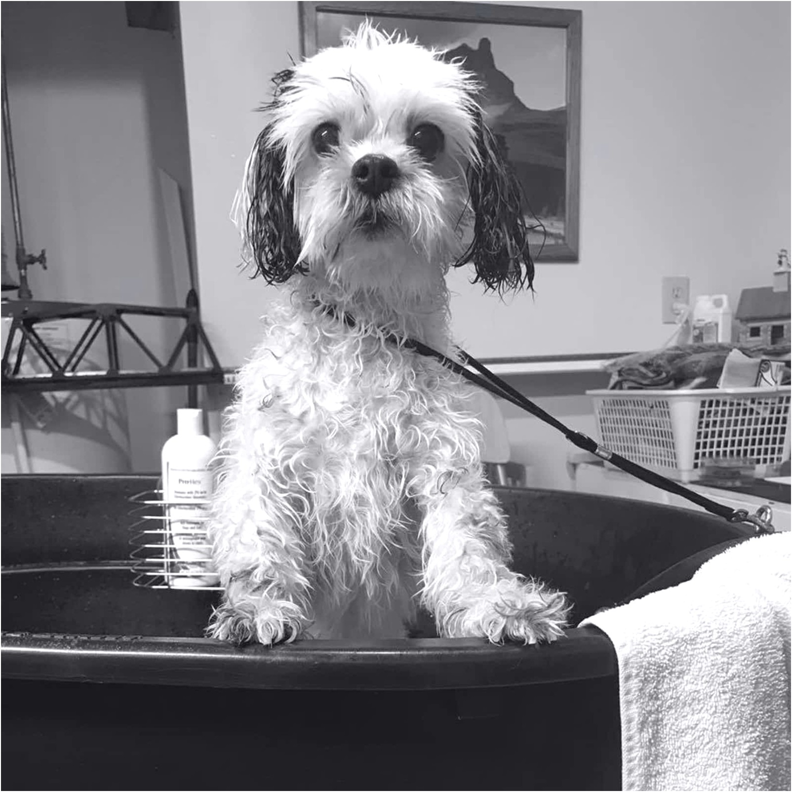 best mobile dog grooming near me
