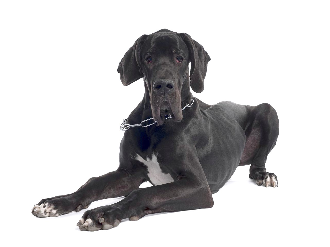 best puppy food for great dane puppies