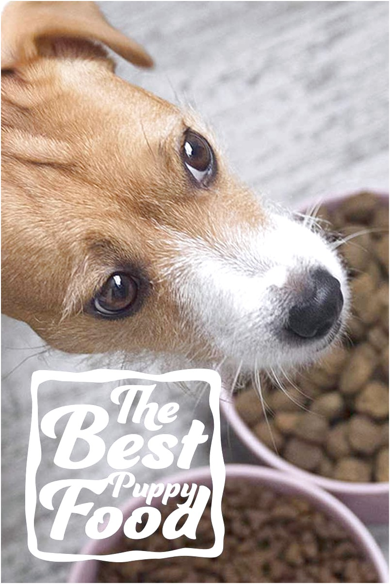 best puppy food for small dogs canada