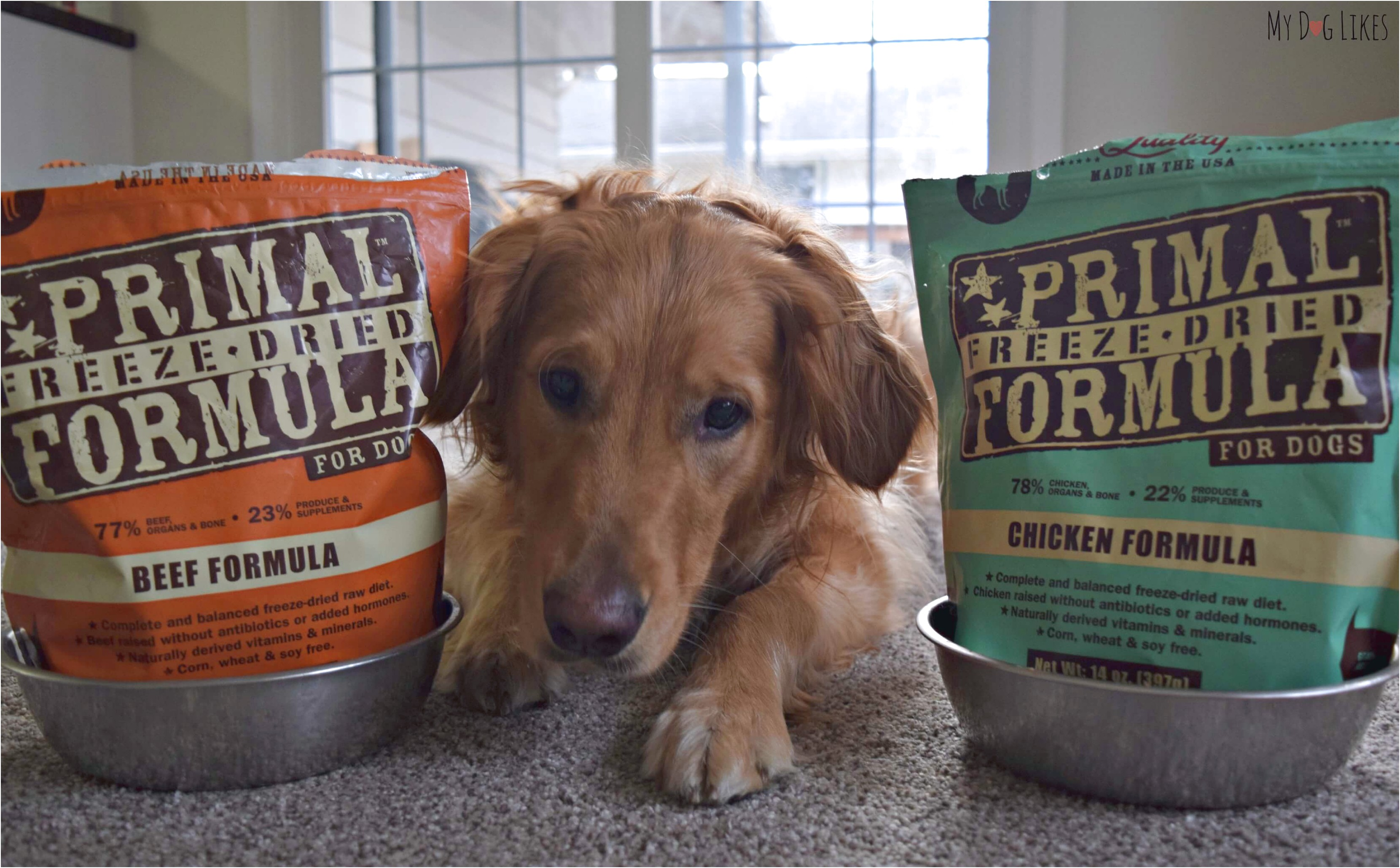 best quality dog food for dachshunds