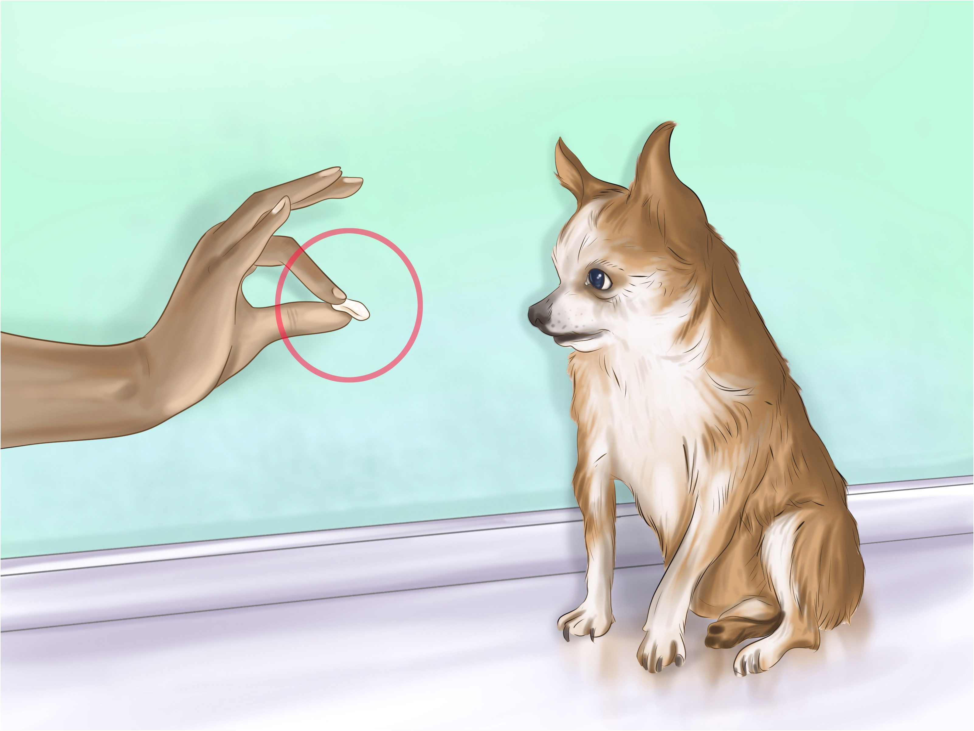 best way to potty train your chihuahua