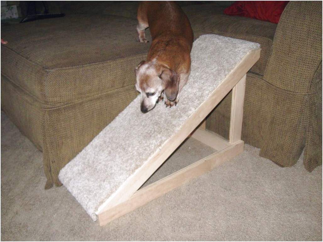 building a dachshund ramp