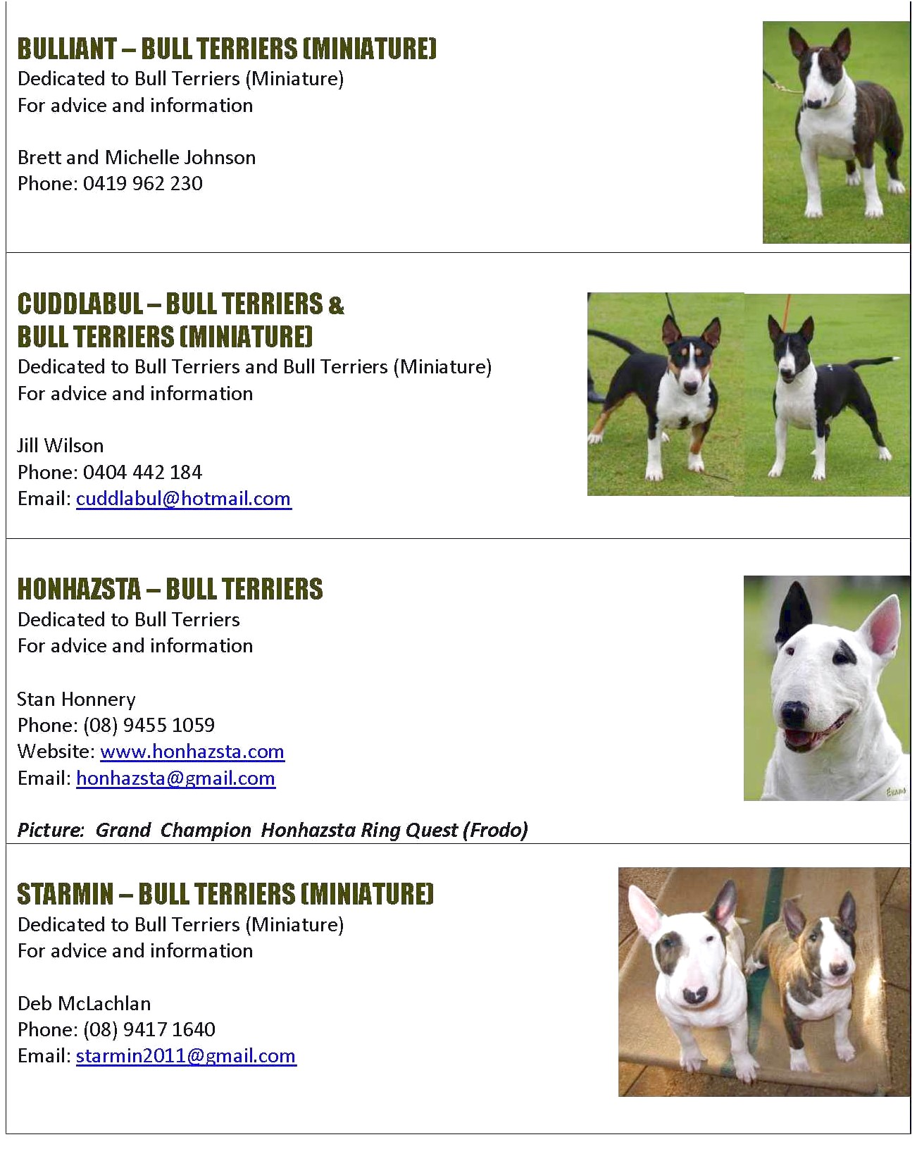 bull terrier pups perth wa
