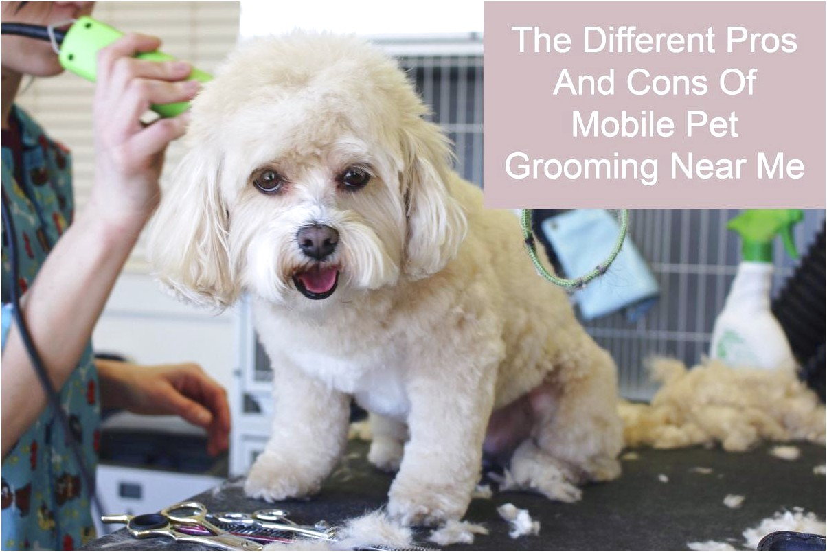 cheap mobile pet grooming near me