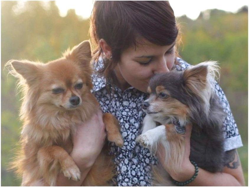 chihuahua puppies for sale in edmonton