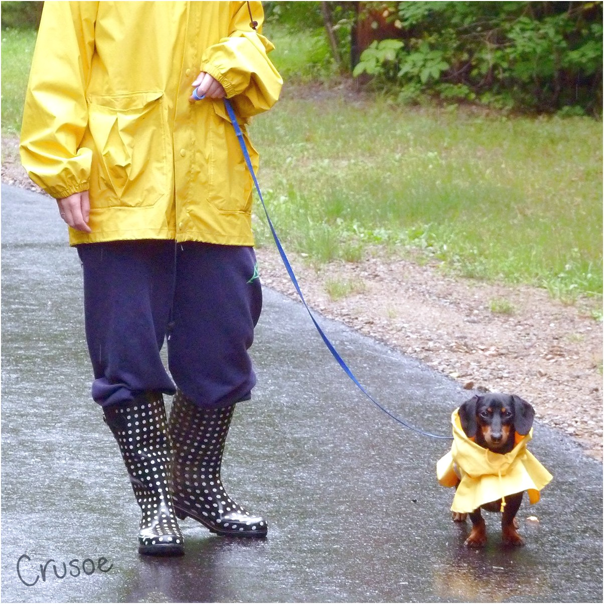crusoe dachshund raincoat