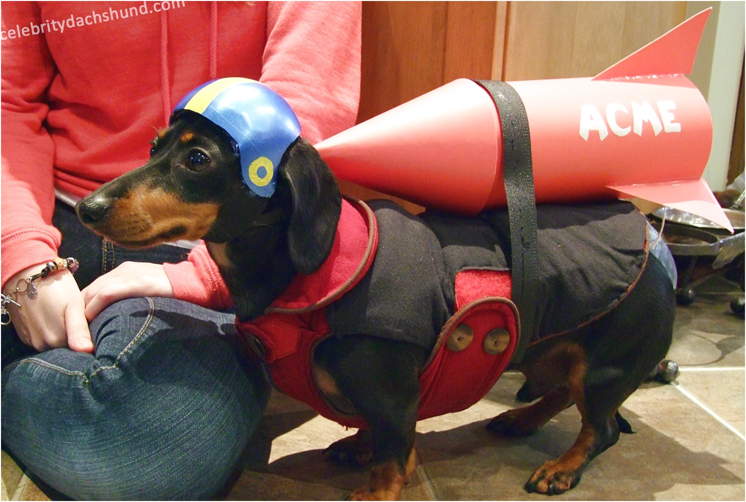 dachshund halloween costumes for sale