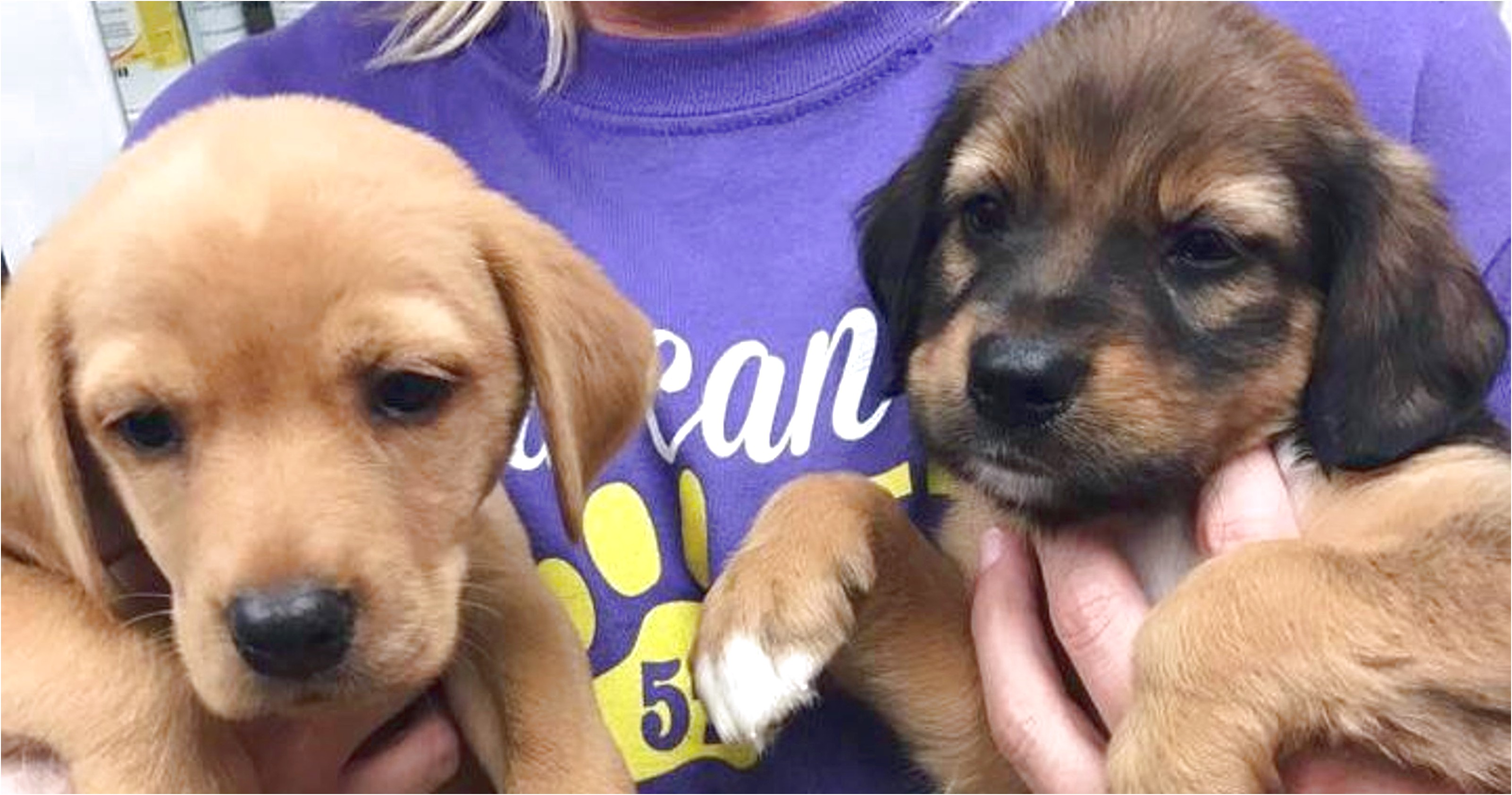 dachshund puppies for sale in beaumont texas