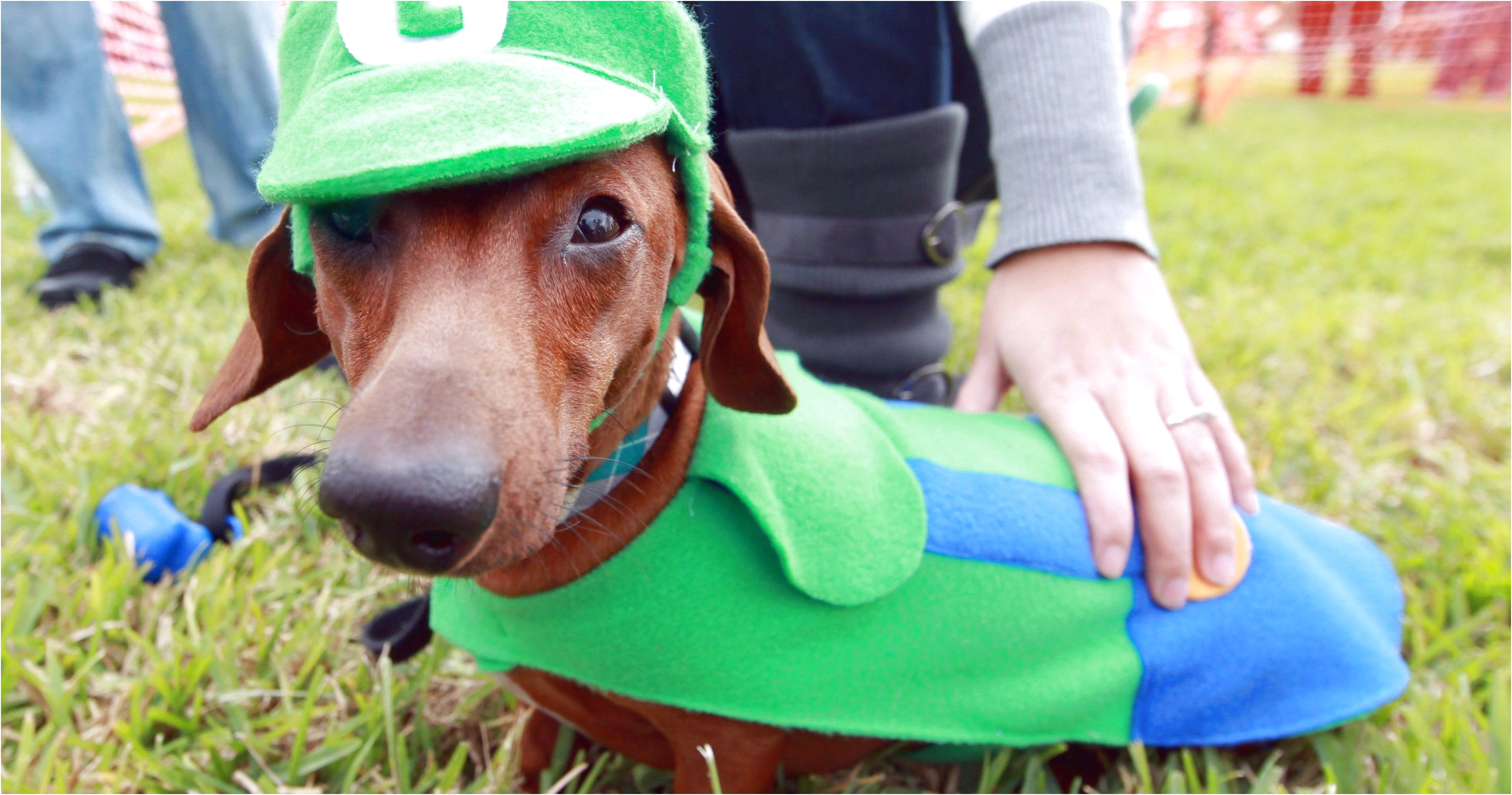 dachshund puppies for sale in corpus christi texas