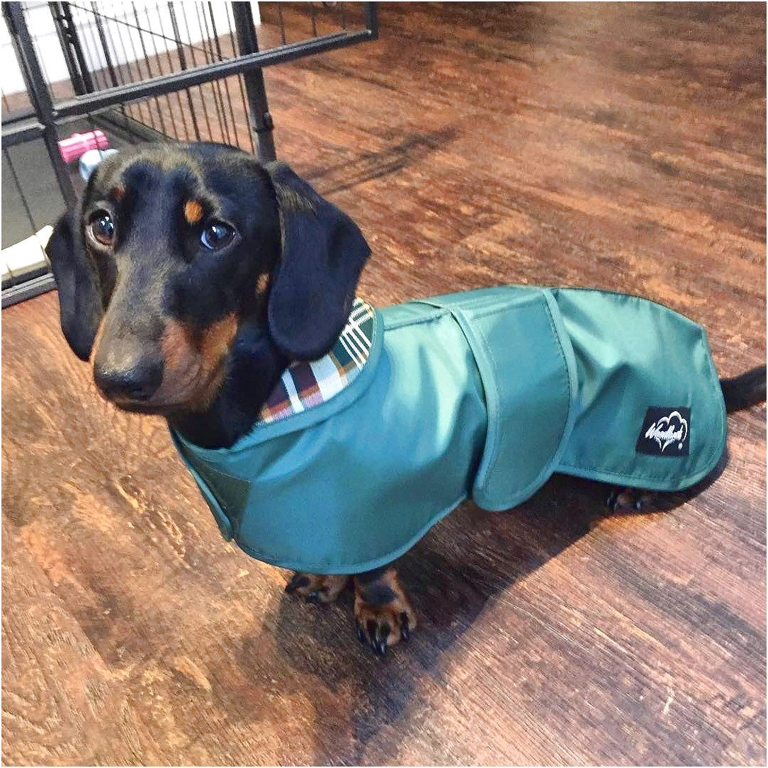 dachshund raincoat uk