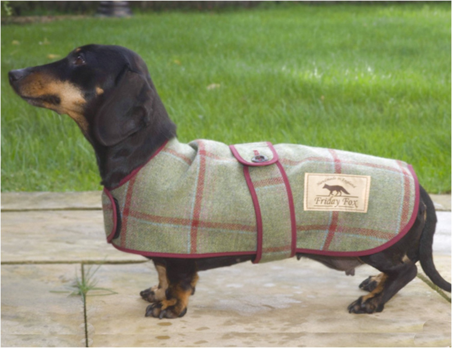 dachshund raincoats uk