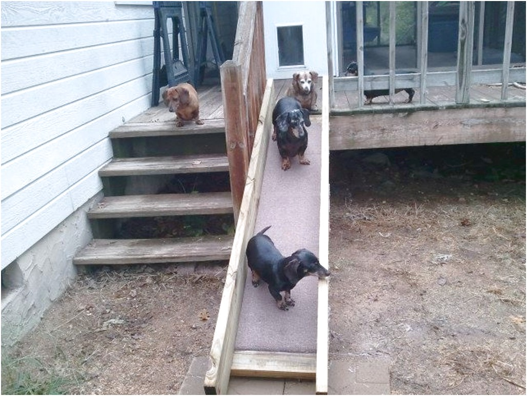dachshund ramp for stairs