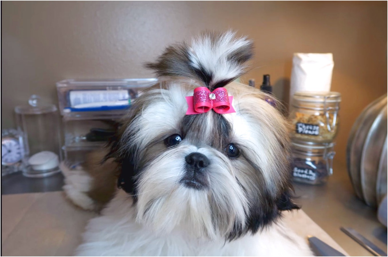 dangerous foods for shih tzu