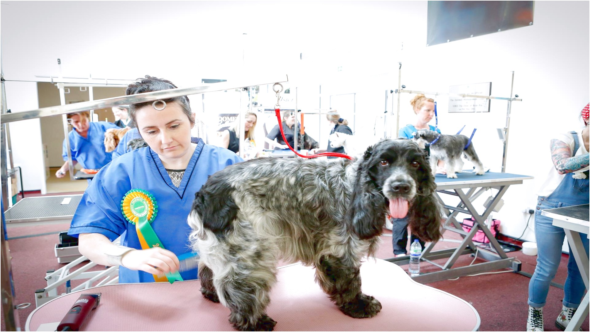 dog grooming courses near bradford