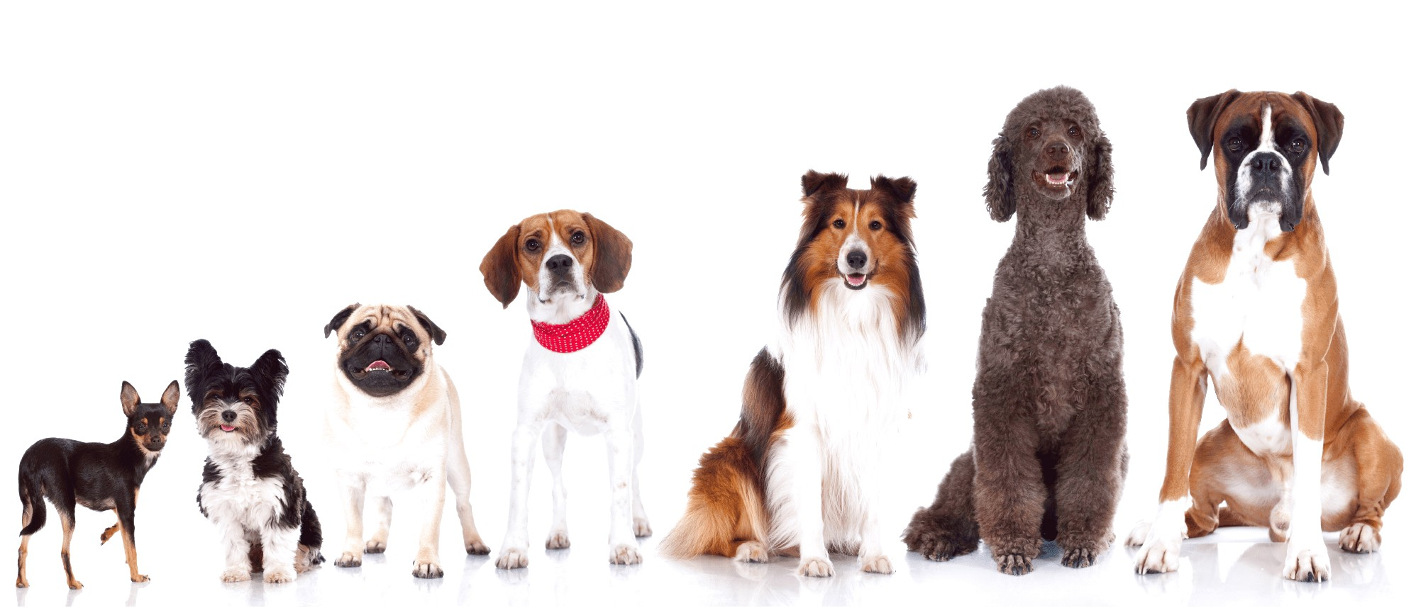 dog grooming courses near hereford