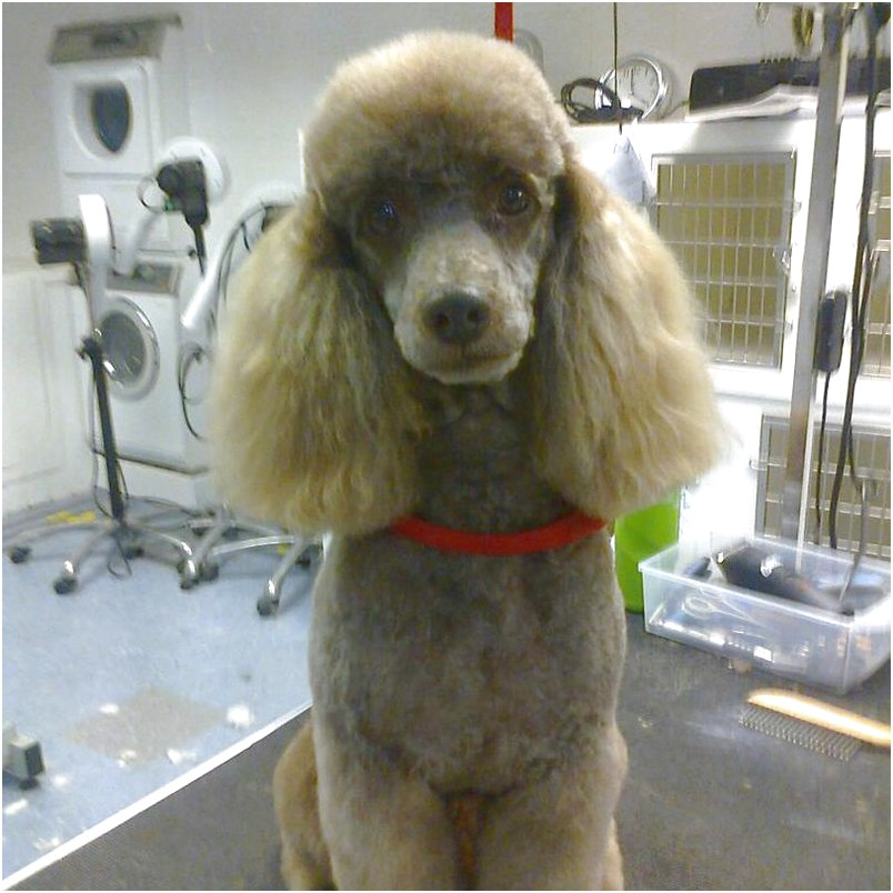 dog grooming courses near me