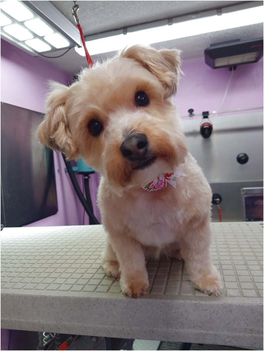 dog grooming courses near slough
