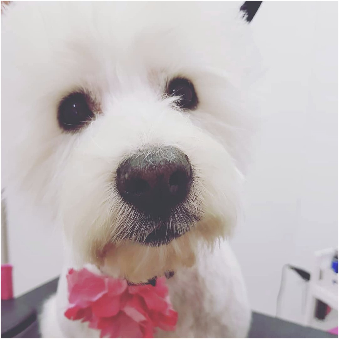 dog grooming courses near worksop