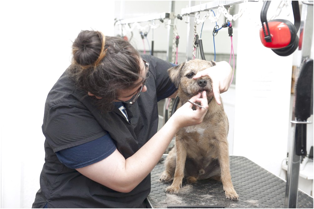 dog grooming courses near york