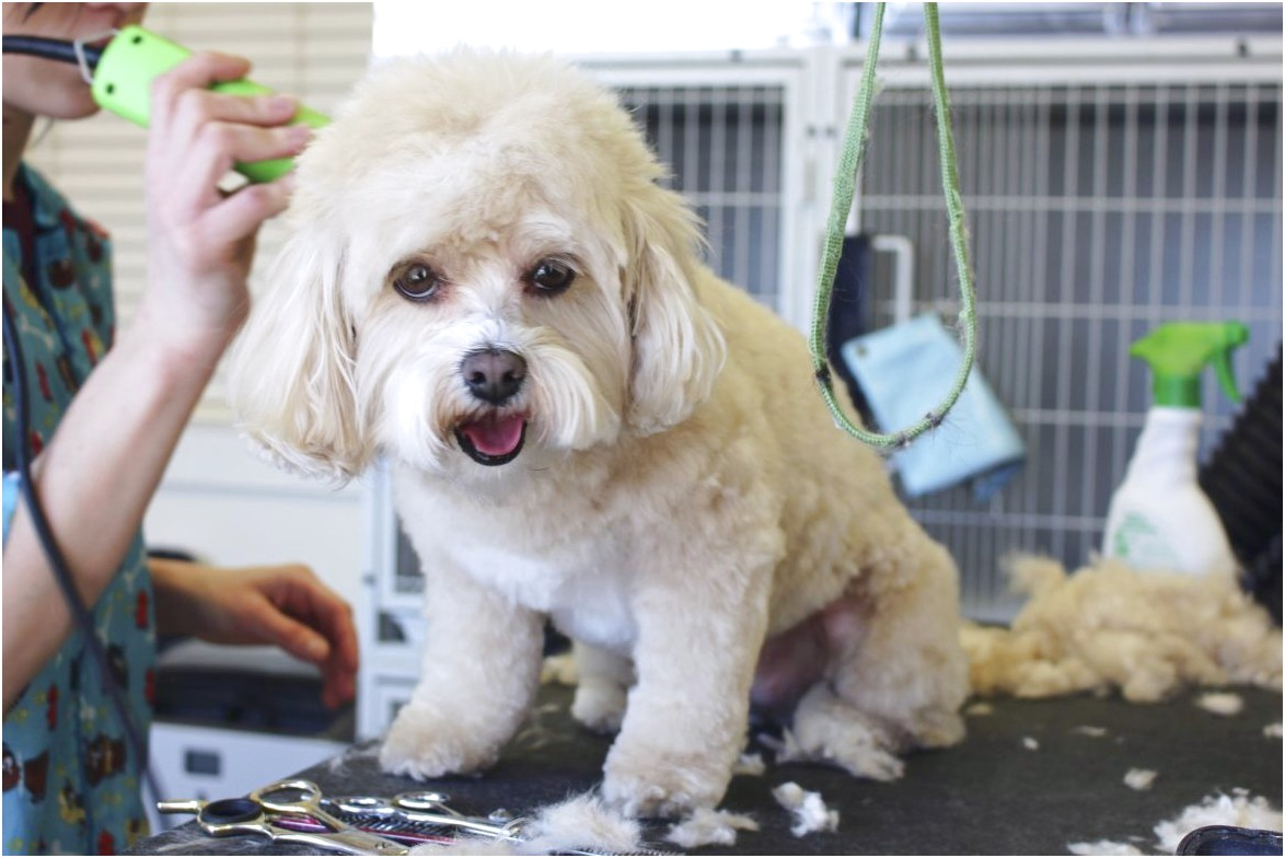 dog grooming school mesa az