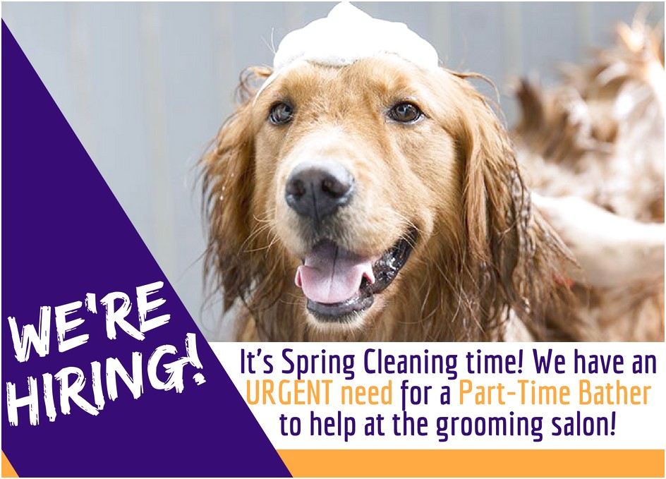 dog grooming shops hiring near me