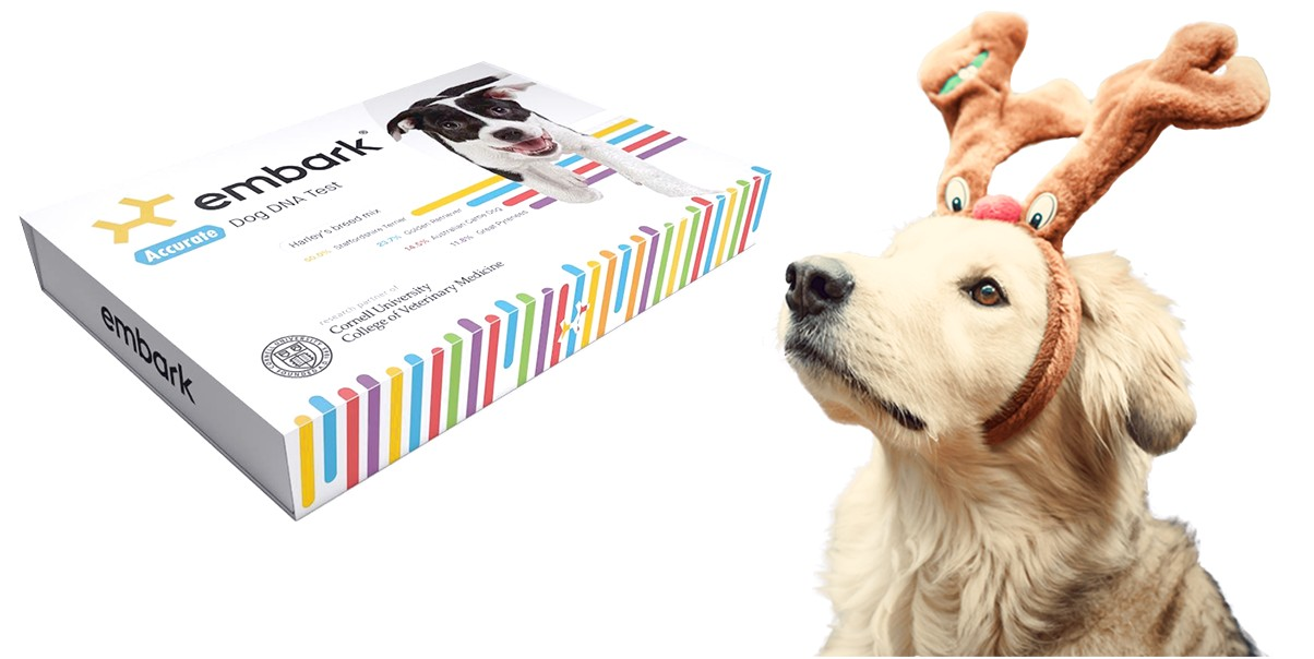 embark breed identification genetic traits dog dna test kit