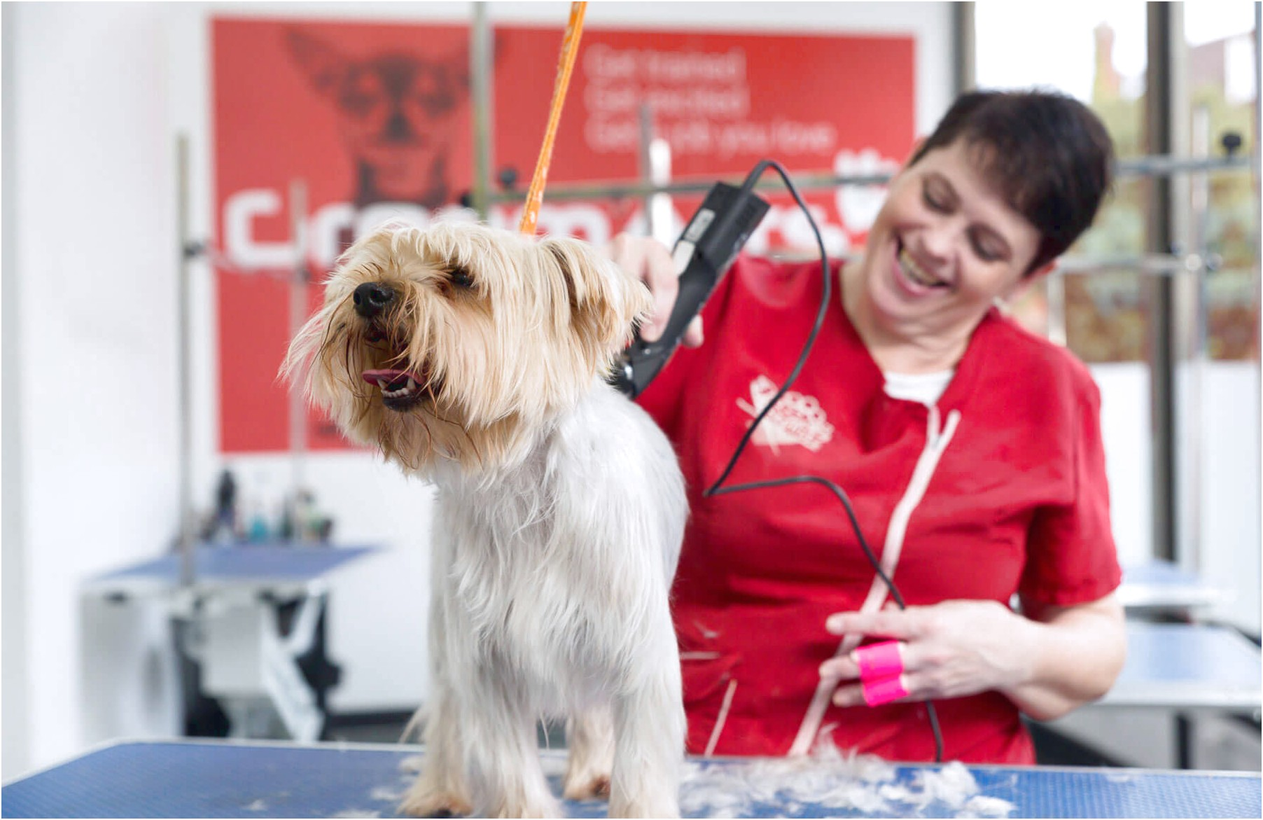 evening dog grooming courses near me