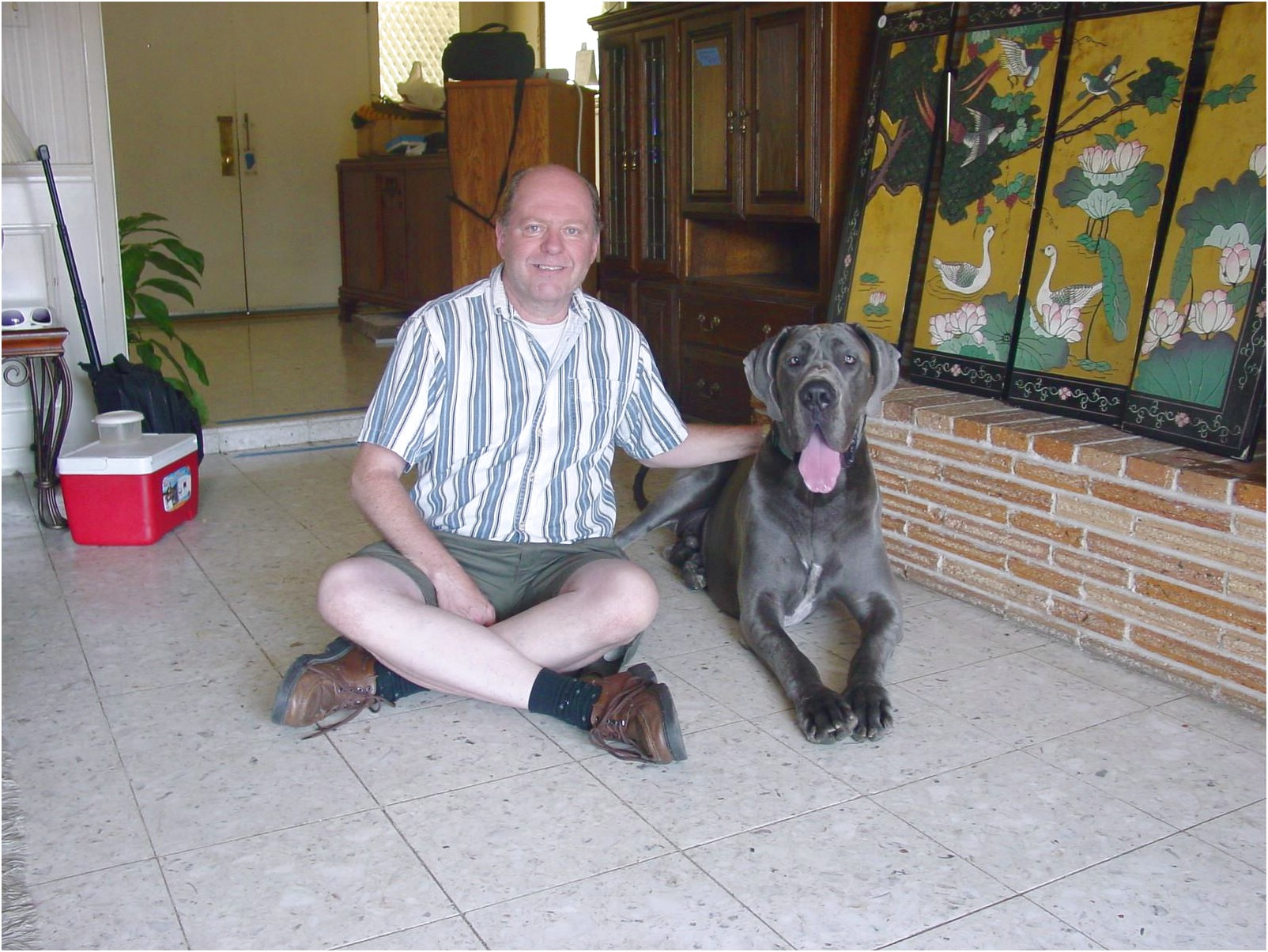 great dane adoption phoenix