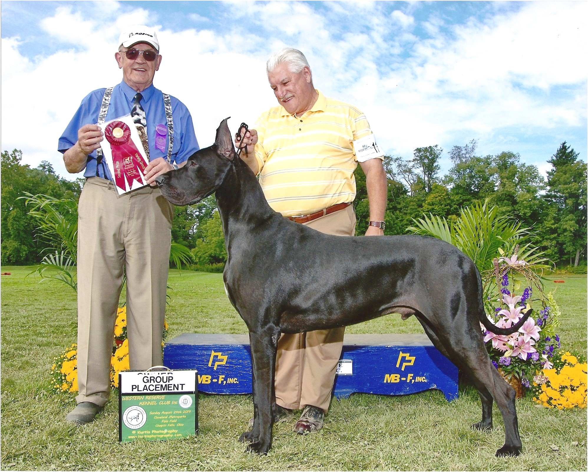 great dane puppies for sale in cleveland ohio