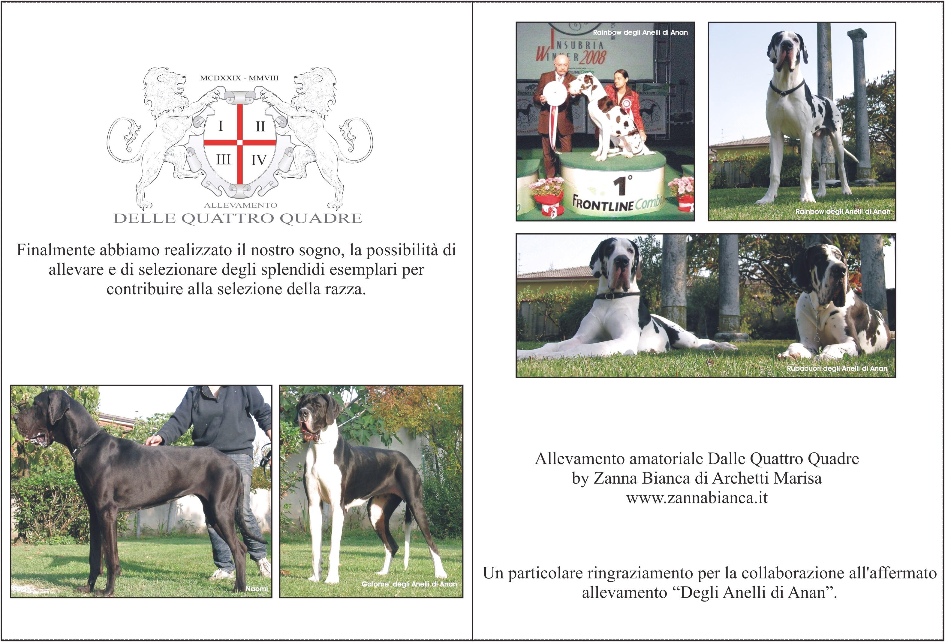 great dane puppies for sale london