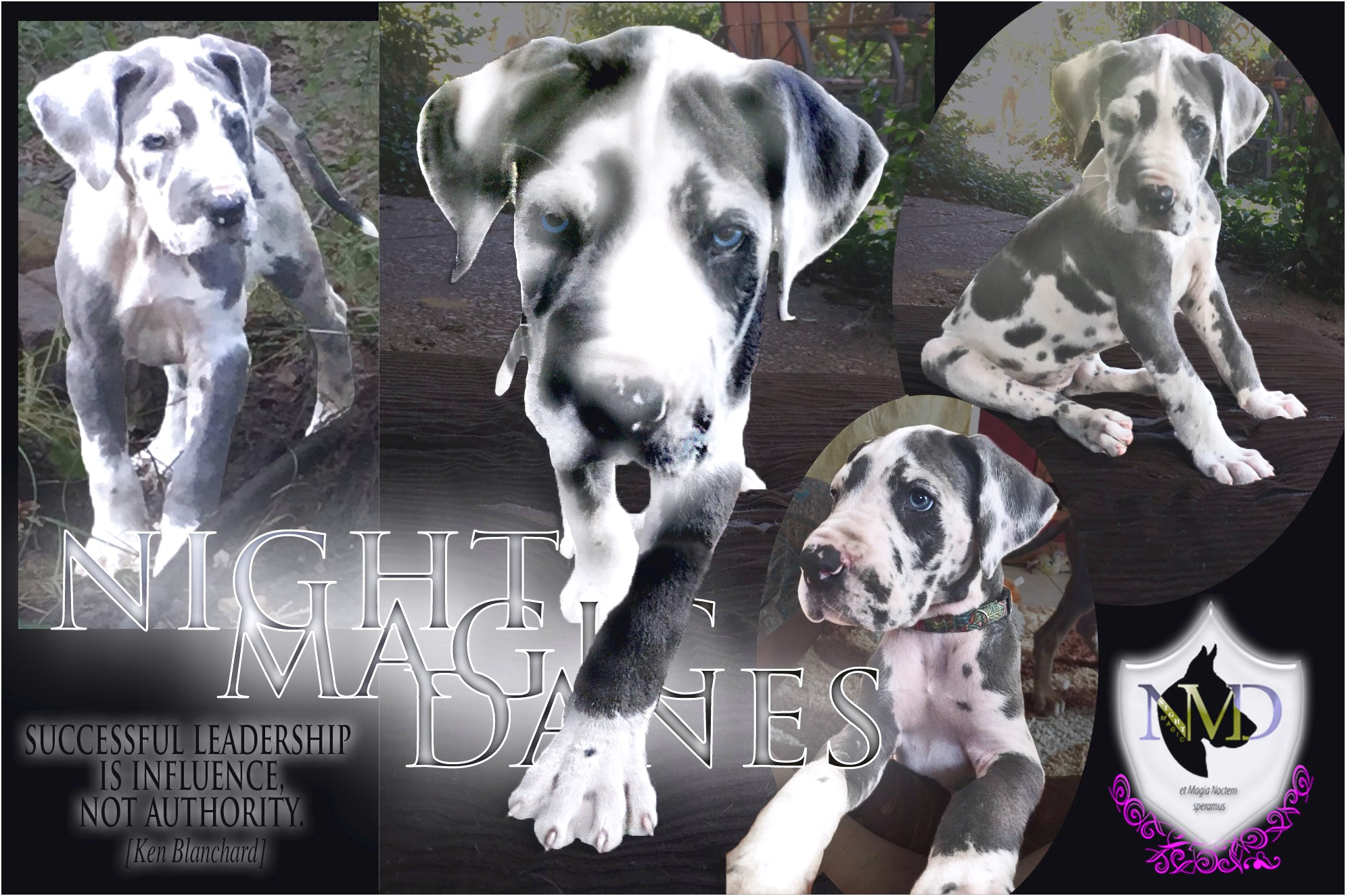 great dane puppies for sale near ohio