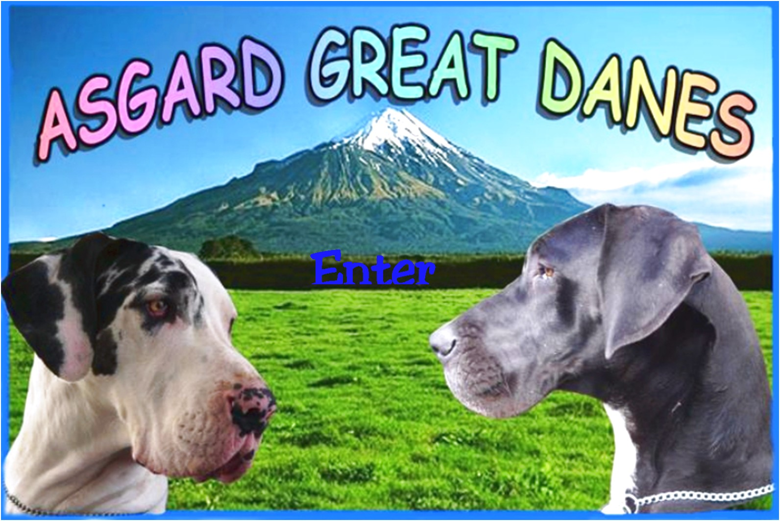 great dane puppies for sale new zealand