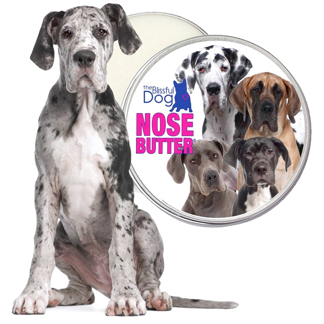 great dane puppies for sale northern california