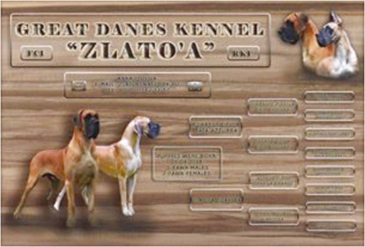 great dane puppies for sale russia